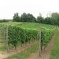 wijndomein-assent